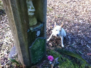 Tazo at the grave